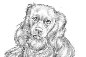 Dog Sketch Thumb